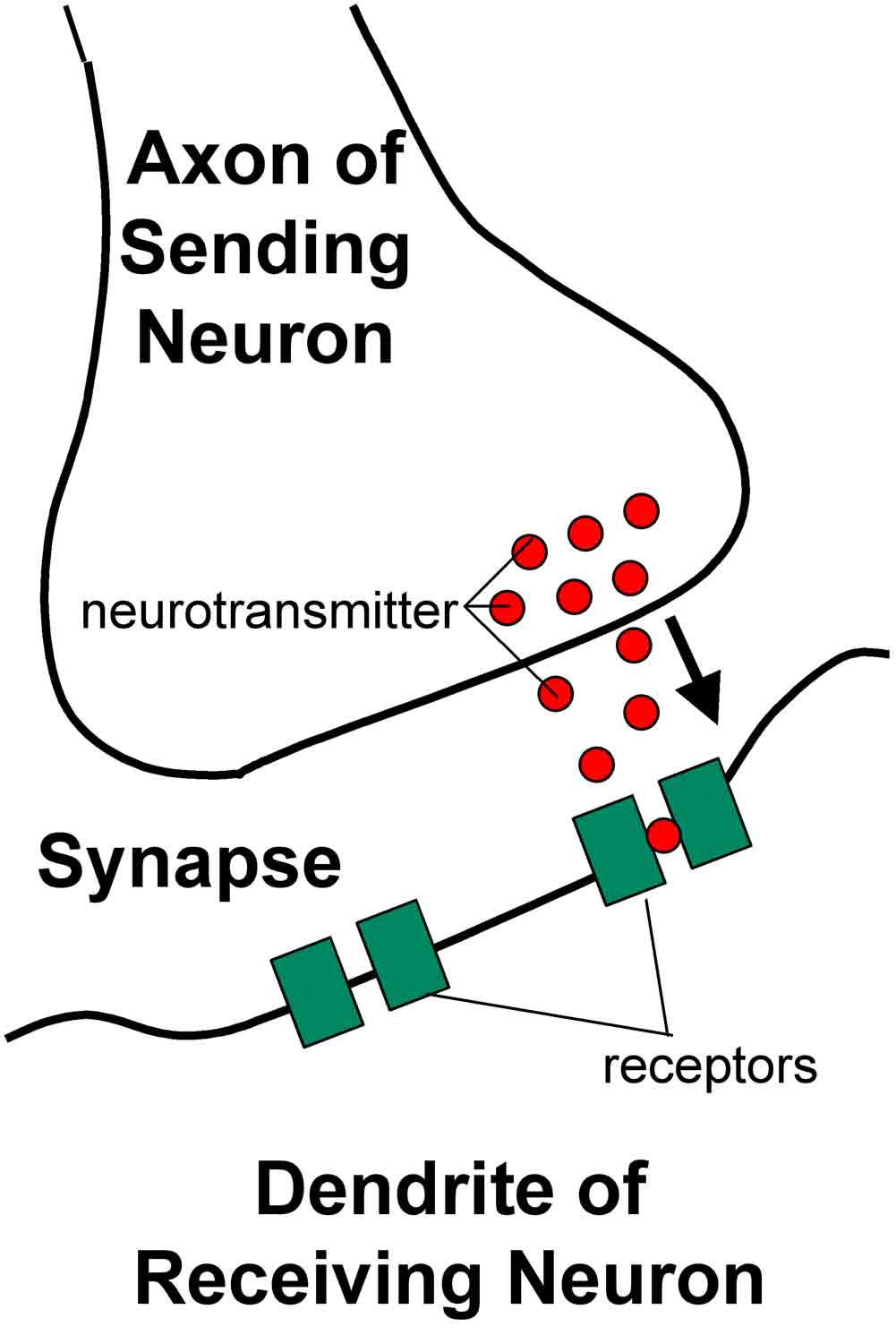 neurotransmitters on physical and mental behavior Behaviors that impact physical and mental health  neurotransmitters:  stress is highly correlated with both physical and mental health,.